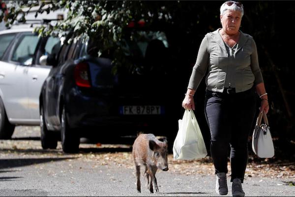 Suciedad, autobuses en llamas y jabalíes dominan elecciones en Roma